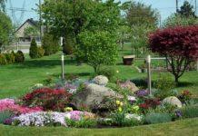 ozdobny trawnik