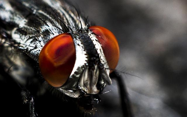 Zabezpiecz dom przed owadami