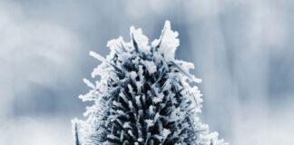 Jak przygotować trawnik do zimy korzystając z wertykulatora?
