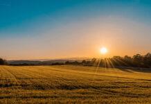 Łatwą dostępność różnorodnej żywności możemy przypisać agrochemii
